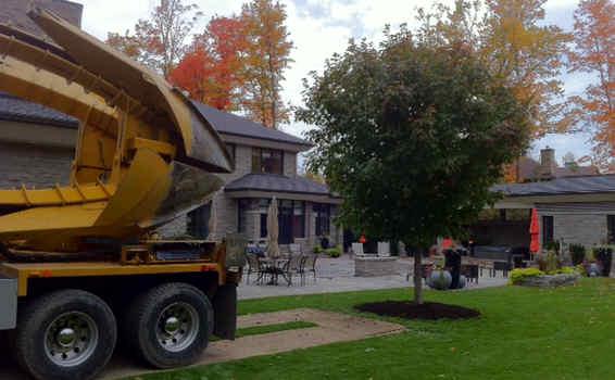 Tree Moving - Manotick Tree Movers Inc
