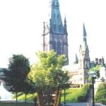 Deciduous Tree planted Parliament Hill