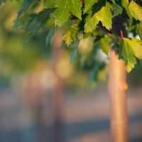 Trees Beautify your Site